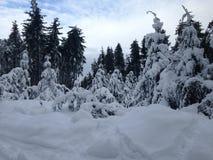 Вершина холма Snowy Стоковое Изображение RF