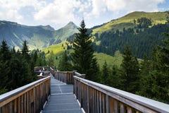 вершин Дерев прогулка в долине Saalbach-Hinterglemm, горах Альпов, Австрии, летнем дне Стоковые Изображения RF