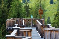 вершин Дерев прогулка в долине Saalbach-Hinterglemm, горах Альпов, Австрии, летнем дне Стоковые Изображения