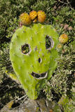 Веселый кактус Стоковое фото RF