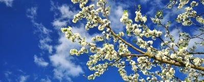 Весеннее время весны стоковое фото rf