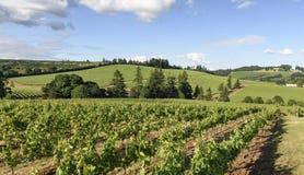 Весеннее время в виноградниках западного Орегона Стоковые Фотографии RF
