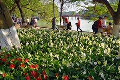 Весеннее время в Ханое с Lillies вокруг озера Hoan Kiem Стоковые Изображения RF