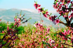 весеннее время горы Стоковое Фото