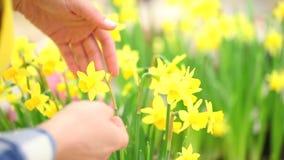 Весеннее время, женщина в саде позаботится о цветки акции видеоматериалы