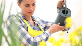 Весеннее время, женщина в саде с чонсервной банкой воды, моча narcissus акции видеоматериалы