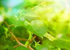 Весеннее время: как природа просыпается Стоковая Фотография