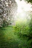 Весеннее время, молодой blossoming вишни just rained Стоковые Изображения RF