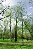 весеннее время парка Стоковая Фотография RF