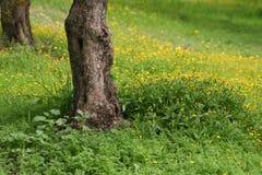 весеннее время поля Стоковая Фотография