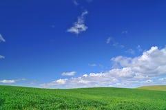 весеннее время поля стоковые изображения rf