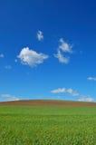 весеннее время поля Стоковое фото RF