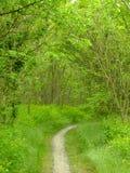 Весеннее время Путь в древесинах Стоковое Фото