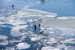 весеннее время реки Стоковые Фото