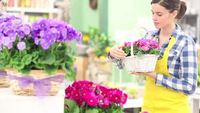 Весеннее время сада, флорист женщины усмехаясь с белыми цветками плетеной корзины фиолетовых первоцветов акции видеоматериалы