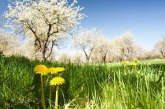 Весеннее время Стоковое Фото