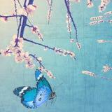 Весеннее время Стоковая Фотография RF