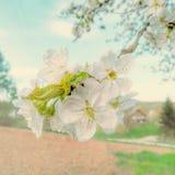 Весеннее время Стоковая Фотография