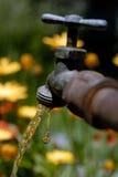 весеннее время faucet капания Стоковое Фото