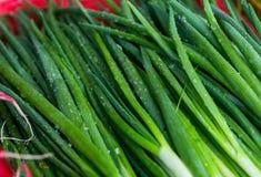 Весенние овощи - лук, редиска, укроп, салат для продажи Стоковая Фотография RF