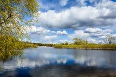 Весенний день на грузя реке Соже стоковая фотография rf
