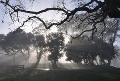 Весенний дождь был запутан в тумане стоковые фото