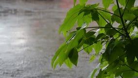Весенний дождь в парке города акции видеоматериалы