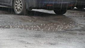 Весенний дождь в парке города сток-видео