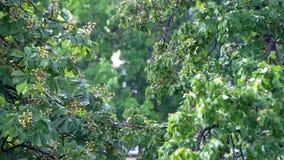 Весенний дождь в парке видеоматериал