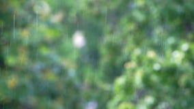 Весенний дождь в парке сток-видео