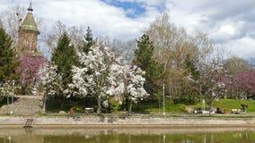 Весенний день на реке Bega берега, Timisoara, Румынии акции видеоматериалы