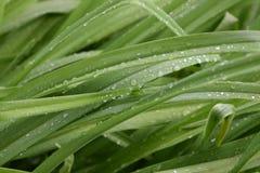 Весенний дождь Стоковые Фотографии RF