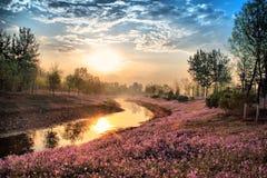 Весенний сезон в парке Пекина олимпийском зеленом стоковое фото