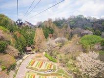 Весенний сезон на ropeway Голень-Кобе сада травы Nunobiki стоковые изображения rf