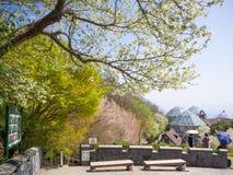 Весенний сезон на ropeway Голень-Кобе сада травы Nunobiki стоковое фото rf