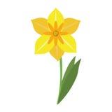 Весенний сезон цветка Narcissus бесплатная иллюстрация