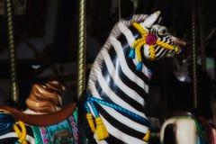 Веселый идет зебра круга стоковое фото
