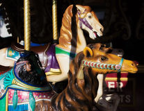 Веселый идут лошадь и верблюд круга Стоковое фото RF