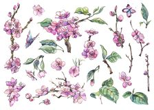 Весна акварели установила ветви винтажных флористических элементов зацветая иллюстрация вектора