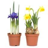 весна баков цветков Стоковые Фото