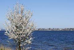 весна береговой линии Стоковые Изображения