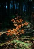 Весна будя лес стоковые фотографии rf
