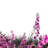 весна букета Стоковые Фотографии RF
