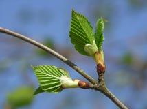 весна бутона Стоковая Фотография RF