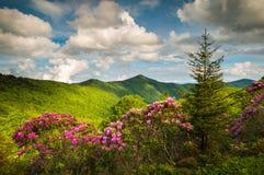 Весна бульвара Asheville Северной Каролины голубая Риджа цветет Sceni стоковое фото rf