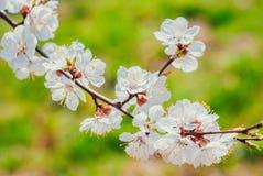 Весна будя на деревьях Стоковая Фотография RF