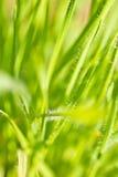 Весна близкая вверх красочных зеленой травы и цветков в солнечном свете outdoors Стоковая Фотография RF