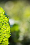 Весна близкая вверх venation разрешения зеленого цвета макроса в солнечном свете Стоковые Фото