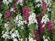 Весна вверх Стоковые Фото