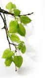 весна ветви искусства Стоковое Фото